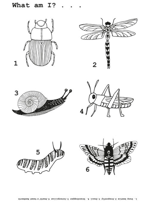 Bugs colouring in sheet
